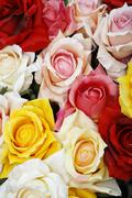 Colored roses of cloth Stock Photos