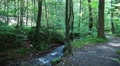 4k Chilling sunny path with water stream in low mountain range Harz 4k or 4k+ Resolution