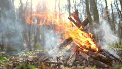 Fire burning in the forest Stock Footage