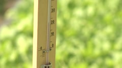 Tobacco seedlings in the greenhouse thermometer close-up - stock footage