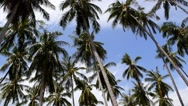 Stock Video Footage of Coconut Palm Trees against Blue Sky on the Beach. Speed up.