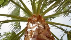 Beautiful palm tree. The view from the bottom up Stock Footage