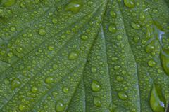 Leaf covered in dew drops, nationalpark bayrischer wald (bavarian forest nati Stock Photos