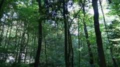 4k Deep forest low angle of sunny lower mountain range Harz Stock Footage