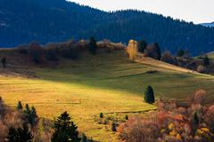 Stock Photo of autumn mountain meadow with grass and mixed forest in morning light