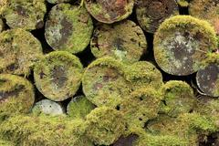 Moss - and lichen-covered rotted wood Stock Photos