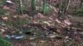 4k Tilt up deep forest hills of sunny low mountain range Harz 4k or 4k+ Resolution