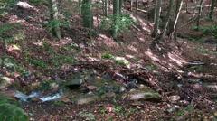 4k Tilt up deep forest hills of sunny low mountain range Harz Stock Footage