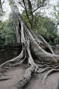 jungle overgrowing ta trohm temple, bayon temple, angkor thom, cambodia, sout - stock photo