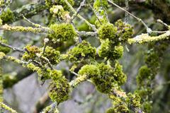 mosses (bryophyta) and lichens - stock photo