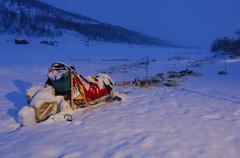 Snow-covered dog sledding rig at dawn, finnmark, norway, scandinavia Kuvituskuvat