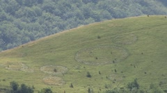 Circles in the grass on the mountain Stock Footage