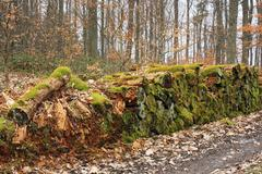 moss covered logpile rotting beside a forest path, waste of natural resources - stock photo