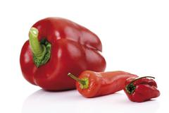 red capsicum and chili peppers (fresno and habanero) - stock photo