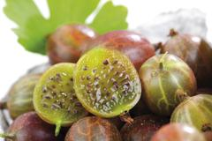 gooseberries (ribes uva-crispa) - stock photo
