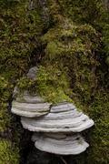 Moss and bracket fungus or tree fungus, lueerwald forest, sauerland, north rh Stock Photos
