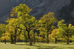 Stock Photo of grosser ahornboden, karwendel range, tyrol, austria, europe