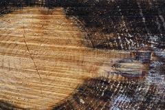 tree rings and heartwood of a spruce tree (picea), lueerwald (luer forest), s - stock photo