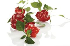 freshly-picked capsicums (red bell peppers) with leaves - stock photo