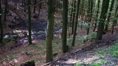 4k Natural forest of sunny lower mountain range Harz Stock Footage