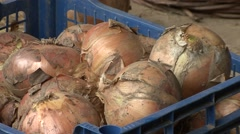 Stock Video Footage of Crate of onions