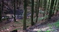 Natural forest of sunny lower mountain range Harz HD Footage