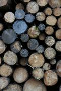 Stacked spruce logs (picea), clean-up after a storm, lueerwald (luer forest), Stock Photos