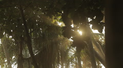 Sun shining through the trees Stock Footage