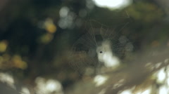 Spider's web Stock Footage