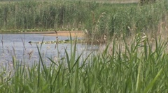 Pond for irrigation Stock Footage