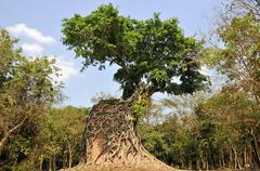 jungle overgrowing sambor prei kuk temple ruins, kompong thom province, cambo - stock photo