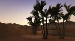 oasis in a desert by night - stock footage