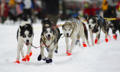 Huskies running during finnmarksløpet doglsed race, alta, norway, scandinavi Stock Photos