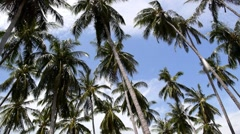 Palm Trees Blowing in the Wind near the Sea in Thailand. Speed up. Stock Footage