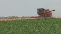 Stock Video Footage of Harvester reaps wheat next to soybean field