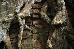 roots of a tropical tree overgrow a wall, angkor, cambodia - stock photo