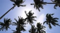 Sun through Palm Tree Leaves. Summer Beach. Slow Motion. HD Footage