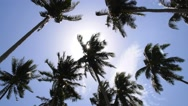 Stock Video Footage of Sun through Palm Tree Leaves. Summer Beach. Slow Motion.