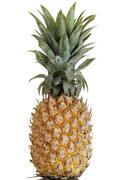 pineapple (ananas comosus) - stock photo