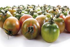 Fresh sardinian tomatoes (solanum lycopersicum) Kuvituskuvat