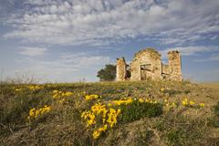 autumn crocuses (colchicum autumnale) growing in front of farm ruins in tusca - stock photo