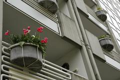 Red carnations in a flower tub made of concrete at a house façade, herten, n Stock Photos