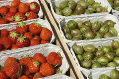 Freshly picked organically-grown strawberries and gooseberries in baskets Stock Photos