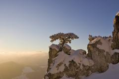 Snow covered pine on a rock on the peilstein hill lower austria Stock Photos