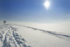 tracks in snow towards a solitary tree on the horizon, upper bavaria, germany - stock photo