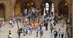 Visitor crowd fades at Natural History museum 4K - stock footage