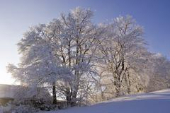 Trees covered with a lot of snow peilstein lower austria Stock Photos