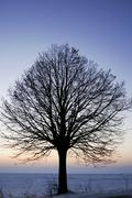 Leafless tree Stock Photos