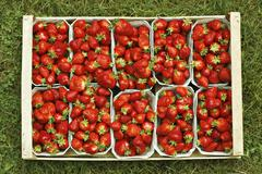 Freshly picked organically-grown strawberries in baskets Stock Photos