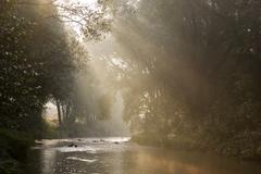 Stock Photo of sun and fog illuminate the triesting river triesting valley lower austria